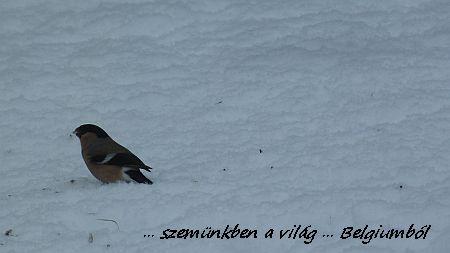téli kép7