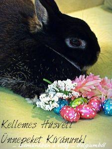 kellemes husvéti ünnepeket nyunyikával