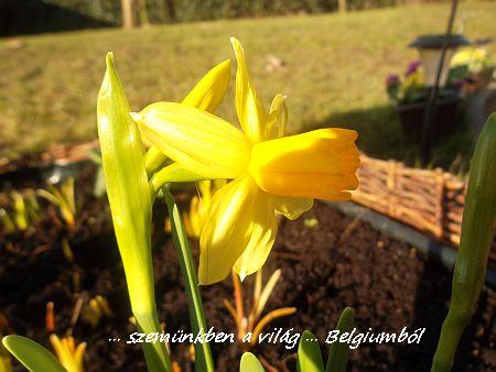 tavaszi képek3