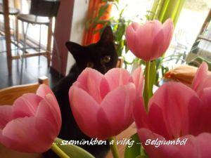 Samu a virágszál
