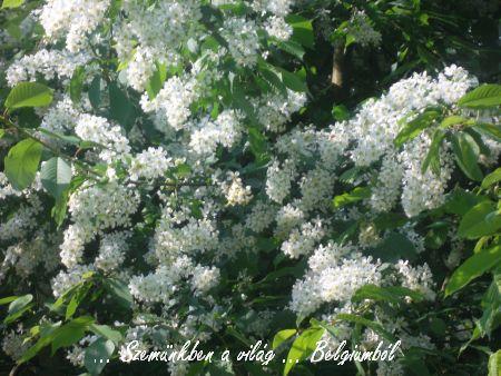 tavaszi képek1