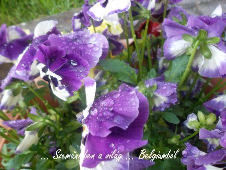 tavaszi képek4