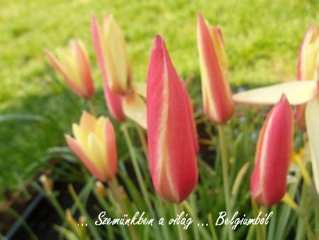 tavaszi képek5