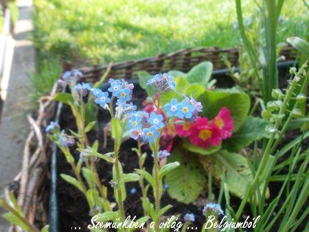 tavaszi képek6