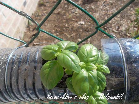 zöldséges4