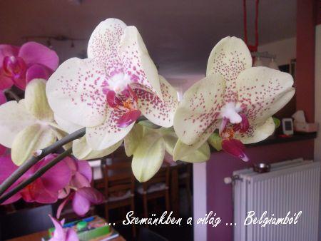 virágaim1