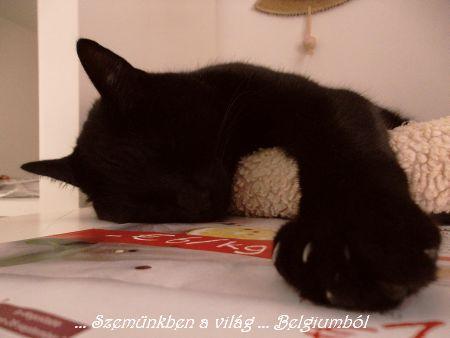 Samu kifojt az ágyából