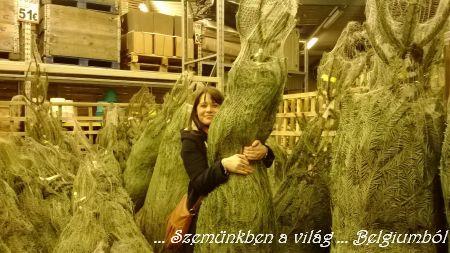 Esztike fája