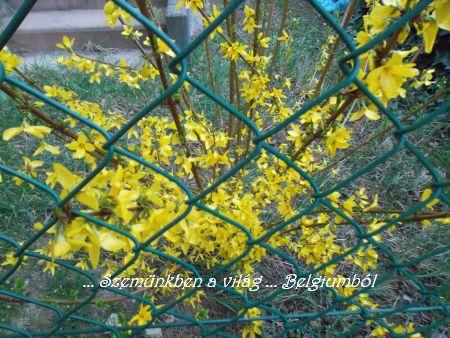 tavasz2