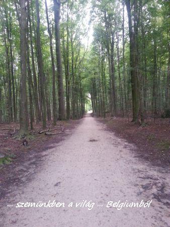 erdőben2