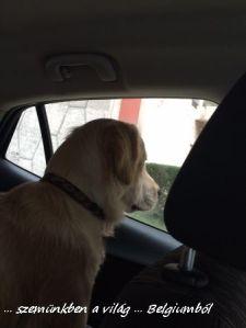 kutyakiállitás4