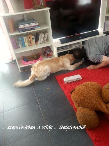 kutyakozmetika charlie-val11