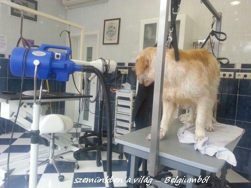 kutyakozmetika charlie-val6