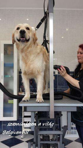 kutyakozmetika charlie-val8
