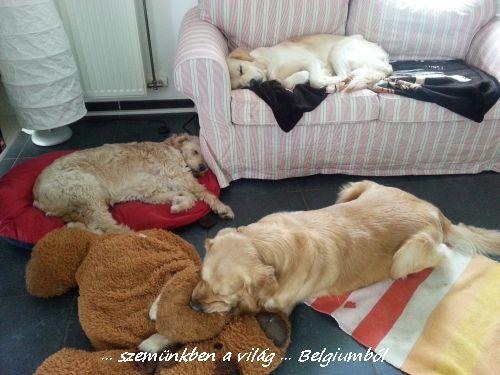 szomoru kutyusok