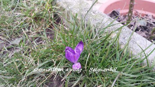 tavasz3