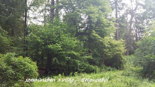erdőnk2