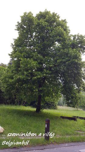 erdőnk4