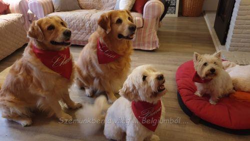 kutyagyerekek