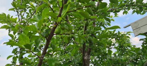 fák napja1